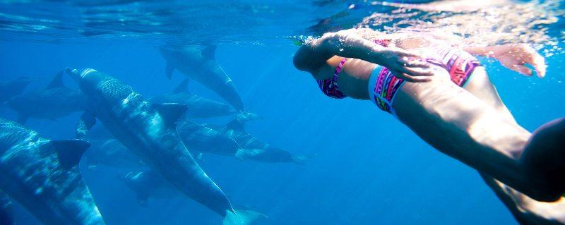 inot cu delfini zanzibar